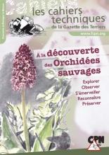 a-la-decouverte-des-orchide