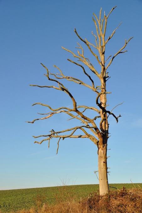 arbre-mort-david-melbeck