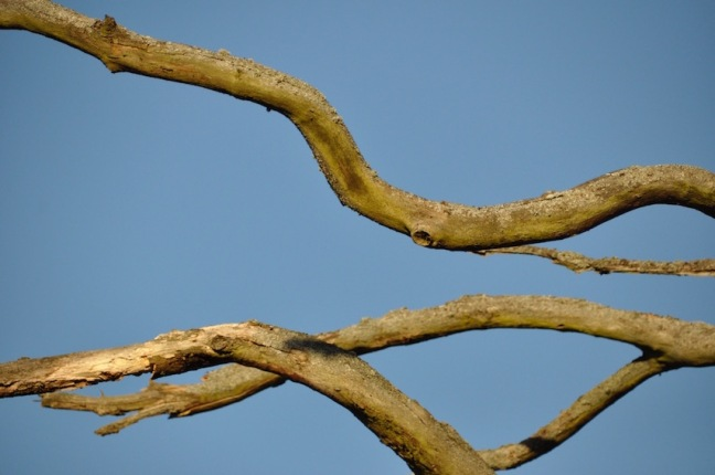branches-mortes-david-melbeck