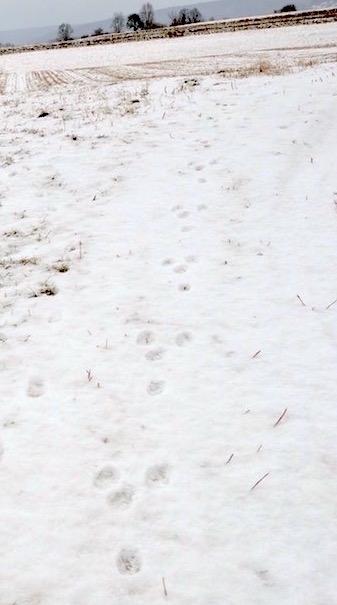 piste-de-lievre-neige-david-melbeck